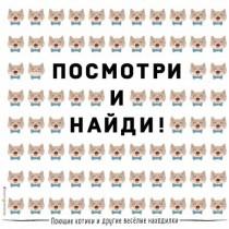 Поющие котики и др весёл...